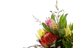 Bunch of Australian Native flowers against white background with Royalty Free Stock Photos