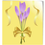 Bunch of autumn crocus flowers Stock Photography