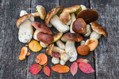 A bunch of autumn edible mushrooms Stock Image