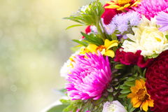 Bunch of autumn flowers. As a background royalty free stock photo