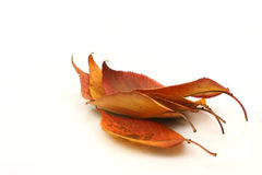 Bunch of autumn leaves. On a white background Royalty Free Stock Photos