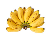 Bunch of baby banana. Isolated on white background royalty free stock photography