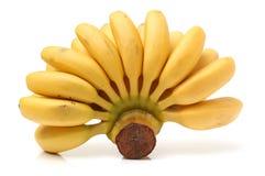 Bunch of baby banana Stock Image