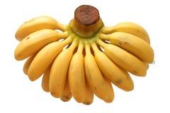 Bunch of baby banana Royalty Free Stock Image
