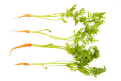 Bunch of baby carrots Stock Photography