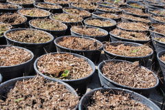 A bunch of baby plants growing inside of pots inside of a greenhouse nursery. Royalty Free Stock Images
