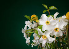 Bunch of baby's flowers Stock Images