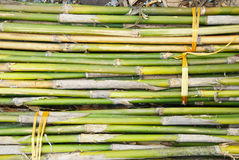 Bunch of bamboo Royalty Free Stock Images