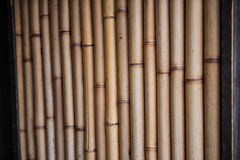 A bunch of bamboo sticks Stock Photos