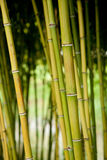 Bunch of bamboo tree stems/sticks Stock Photo