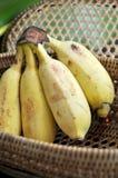 Bunch of banana in basket Stock Photos