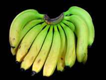 Bunch of Banana's. Large bunch of freshly picked bananas isolated on black background Stock Photography