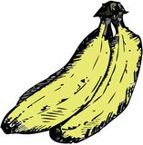 Bunch of bananas. Hand drawn vector illustration of a bunch of three yellow bananas Royalty Free Stock Photography