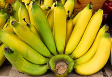 Bunch of bananas. Stock Image