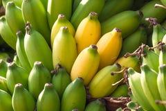 Bunch of bananas on abanana plantation in India. Bunch of bananas on a banana plantation in India Stock Photo