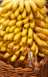 Bunch of bananas in basket Stock Images