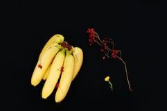 Bunch of bananas on black   background. Fresh organic Banana, Fresh bananas on kitchen table Royalty Free Stock Photo