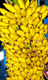Bunch of Bananas close up. A close up of a bunch of bananas being sold in a Dubai Fruit Market Stock Image
