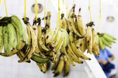Bunch of bananas at the famous Mercado Municipal Adolfo Lisboa in Manaus, Brazil Stock Photos
