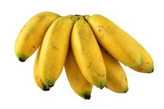 Bunch of bananas in front of white. Royalty Free Stock Images