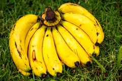 A bunch of bananas on the grass Royalty Free Stock Image