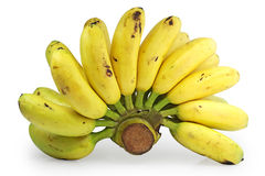 Bunch of bananas. Bunch or hand of bananas on a white studio background Royalty Free Stock Photo