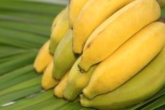 Bunch of bananas, isolated Stock Photo