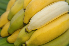 Bunch of bananas isolated Stock Photo