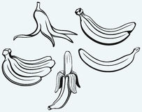 Bunch of bananas, peeled banana and banana peel Stock Photos
