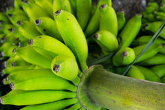 Bunch Bananas Royalty Free Stock Photo
