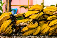 Bunch of bananas. Stack of tasty, yellow bananas. Photo was taken in Portugal Royalty Free Stock Images