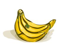Bunch of bananas. Vector watercolor bunch of bananas with shadows on white isolated royalty free illustration
