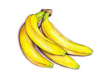 Bunch of bananas  on white background. Watercolor colourful illustration. Tropical fruit. Handwork Stock Images