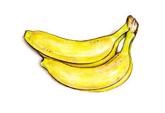 Bunch of bananas  on white background. Watercolor colourful illustration. Tropical fruit. Handwork Royalty Free Stock Image
