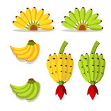 Bunch of bananas with yellow and green Royalty Free Stock Photos