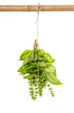 Bunch of basil herb hanging isolated on white Stock Photography