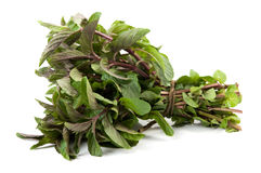 Bunch of basil isolated Stock Photography