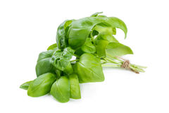 Bunch of basil Royalty Free Stock Photos
