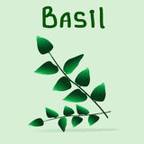 Bunch of basil at the light green background. Draw your salad yourself Stock Image