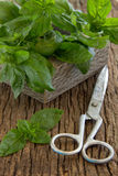 Bunch of basil Stock Images