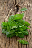 Bunch of basil Stock Image