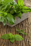 Bunch of basil Royalty Free Stock Photography