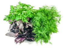 Bunch of basil, parsley and dill Royalty Free Stock Photo