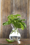 Bunch of Basil in vase with water Royalty Free Stock Images