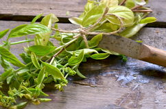 Bunch of basil with vintage special knife for cutting herbs Stock Image