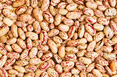 Bunch of beans arranged Royalty Free Stock Image