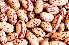 Bunch of beans arranged Royalty Free Stock Photos