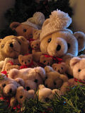 Bunch of Bears. A bunch of cute cuddly bears in snow caps Stock Images
