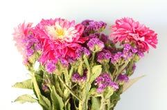A bunch of beautiful dahlias royalty free stock photos