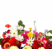 Bunch of beautiful flowers Stock Images